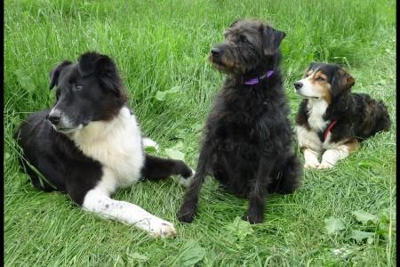 Dog Control Act 2014
